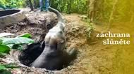 Dojemné záběry ze záchrany slůněte, které spadlo do jámy. Pomohl také další slon